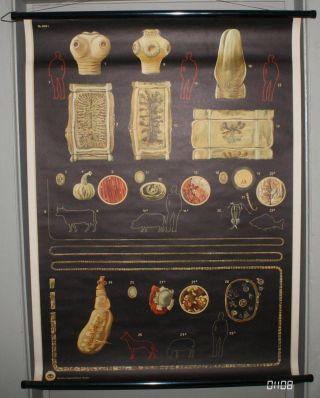 Lehrkarte Poster Bandwurm Medizin Biologie Ddr Schule Ausbildung Lehrmittel 1108 Bild