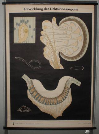 Lehrkarte Poster Entwicklung Auge Sehzelle Regenwurm Biologie Schule Lehrmittel Bild