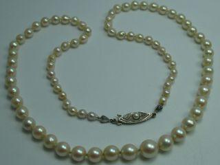 Klasse Alte Salzwasser Collier Perlenkette Mit Schließe Aus 333 Gold Bild