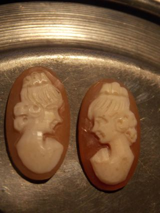 Paar 2 Alte Antike Gemme Kamee Cameo Muschel Ungefasst Für Ohrringe Brosche Ring Bild