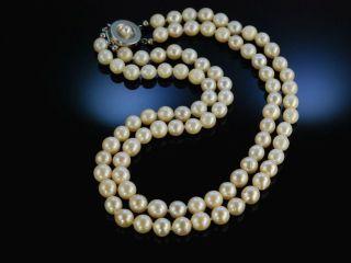 Vintage Akoya Zuchtperlen Collier 2 Reihig Gold 585 Perlenkette Hamburg Um 1965 Bild