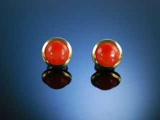 Paar Ohrstecker Lachskoralle Gold 585 Ohrringe Koralle Korallenohrringe Bild
