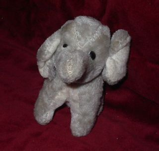 Älterer Niedlicher Elefant Bild