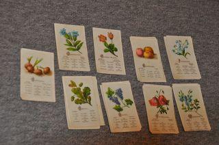 Altes Kartenspiel (quartett) Vor 1945 Bild