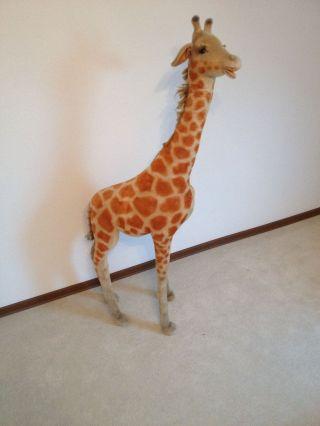 Steiff Giraffen Sammlung Aus Den 60/70 Jahren Bild