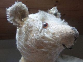 Alter Steiff Teddy Teddybär Bär 45 Cm Brummstimme Bild
