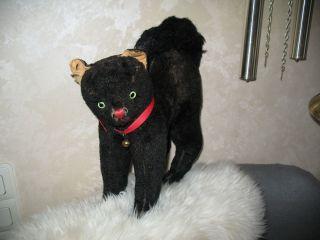 Sehr Alte Schwarze Katze Bild