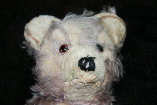 Vintage Teddybär Teddy Bär Antik Alter Bär Ca.  37 Cm Groß Holzwolle,  Brummt Bild