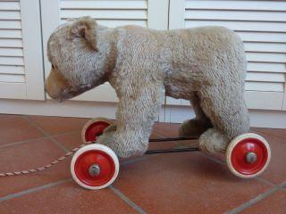 Steiff Bär Auf Rädern Für Liebhaber Und Sammler Bild