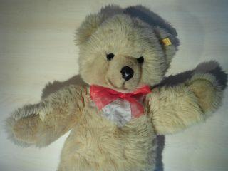 Steiff Teddy Bild