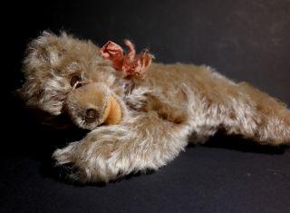 Steiff Teddy Floppy 20 Cm Antik Mohair Bear Bär Steiffteddy Sammlerbär Bild