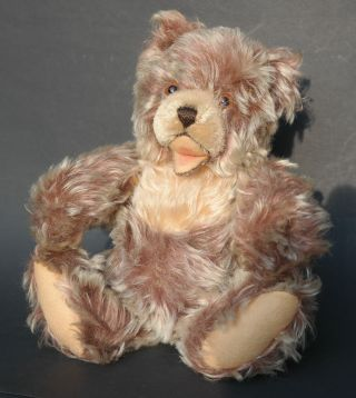 Steiff Teddy Zotty 30 Cm Antik Mohair Bear Bär Steiffteddy Sammlerbär Bild