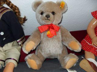 Teddybär Bild
