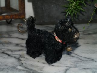 Steiff Scotchterrier Scotty Bild
