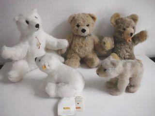 5 Alte Teddybären Teddy Bär Eisbär Steiff Hermann Bear Bild
