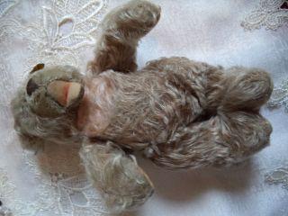 Alter,  Kleiner Zotty - Bär Von Steiff Bild