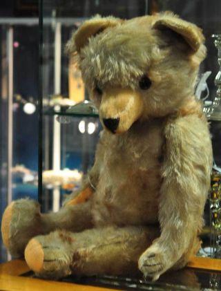 Liebenswerter Sehr Grosser Teddybär Der 50er Jahre Sucht Ein Neues Zuhause Bild