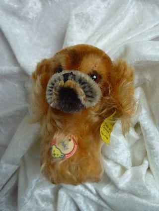 Sammelwürdiges Altes Steiff Stofftier Hund Pekinese Peky 1310.  00 Aus Sammlung Bild