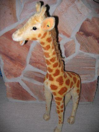 Steif Giraffe 78 Cm Sammlerstück Mit Knopf Und Fahne - Bild