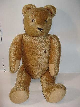 Alter 60 Cm Großer Teddybär Firma Grisly 60er Jahre Bär Aus Kirchheimbolanden Bild