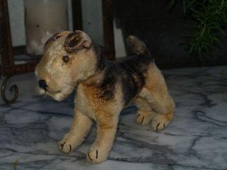 Steiff Airdale Terrier Terry Bild