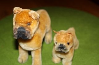 - Rarität - 2 Steiff Hund Boxer - - Bild