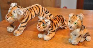 3 Alte Steiff Tiger,  1960 - 1975 Bild
