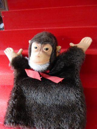 Steiff Handpuppe Jocko,  Schimpanse,  1968 Bild
