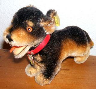 Steiff Hund Lumpi Mit Knopf,  Fahne 1311,  06 Und Schild Bild