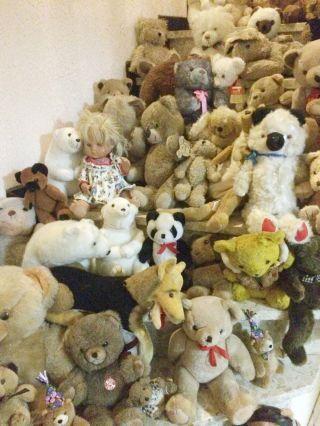 70 Teile Und Mehr Stofftiere Teddybären Konvolut Hermann Hund Und Steiff Teddy Bild