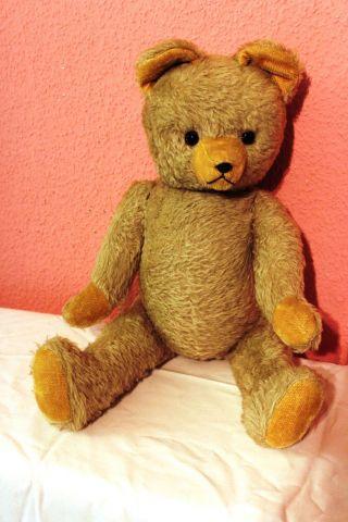 Alter Hermann Teddybär 60 Cm Groß Vitrinenobjekt Bild