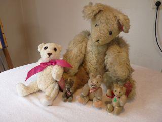 Konvolut Alte Teddybären Bild
