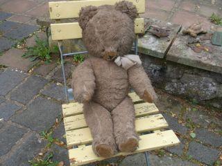 Großer,  Sehr Alter Teddy,  Teddybär,  Bär Mit Brummstimme,  Imposant Bild