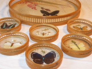 50er 60er : Tablett,  6 Glas - Untersetzer Schmetterlinge Butterfly Rattan Shabby Bild