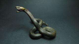 Bronze Schlange Snake Austria Wiener Vienna Bild