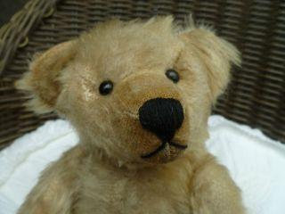Teddy Antik 30 Cm Dunkelweiß Scheibengelenke Schwarze Augen Holzwolle Bild