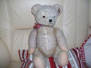 Alter Teddybär Ca: 50.  0 Cm Fa: Plüschtiere Schwika Graz. Bild