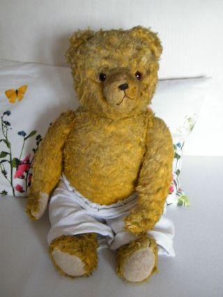 Alter Bär / Teddybär Bild