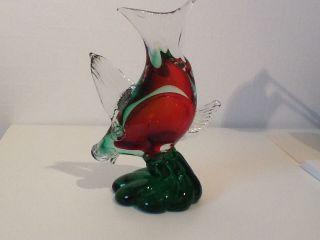 Glasfisch Bild