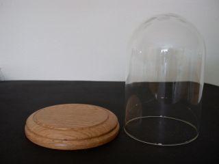 Glasdom Mit Eiche,  Glassturz,  Uhrensturz,  Tischuhr,  Standuhr,  Uhren,  Kaminuhr Bild