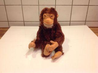 Sehr Alter Steiff Affe Schimpanse Jocko,  Antik Bild