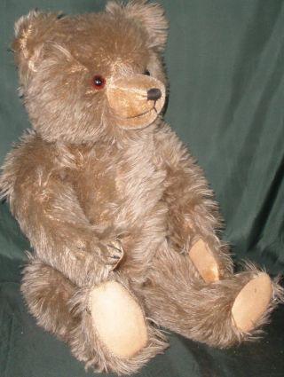 Alter Teddybär,  Grau/braun Mit Plüschfell Und Glasaugen,  50er J. Bild