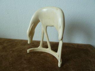 Antilope Horn Bein Bild