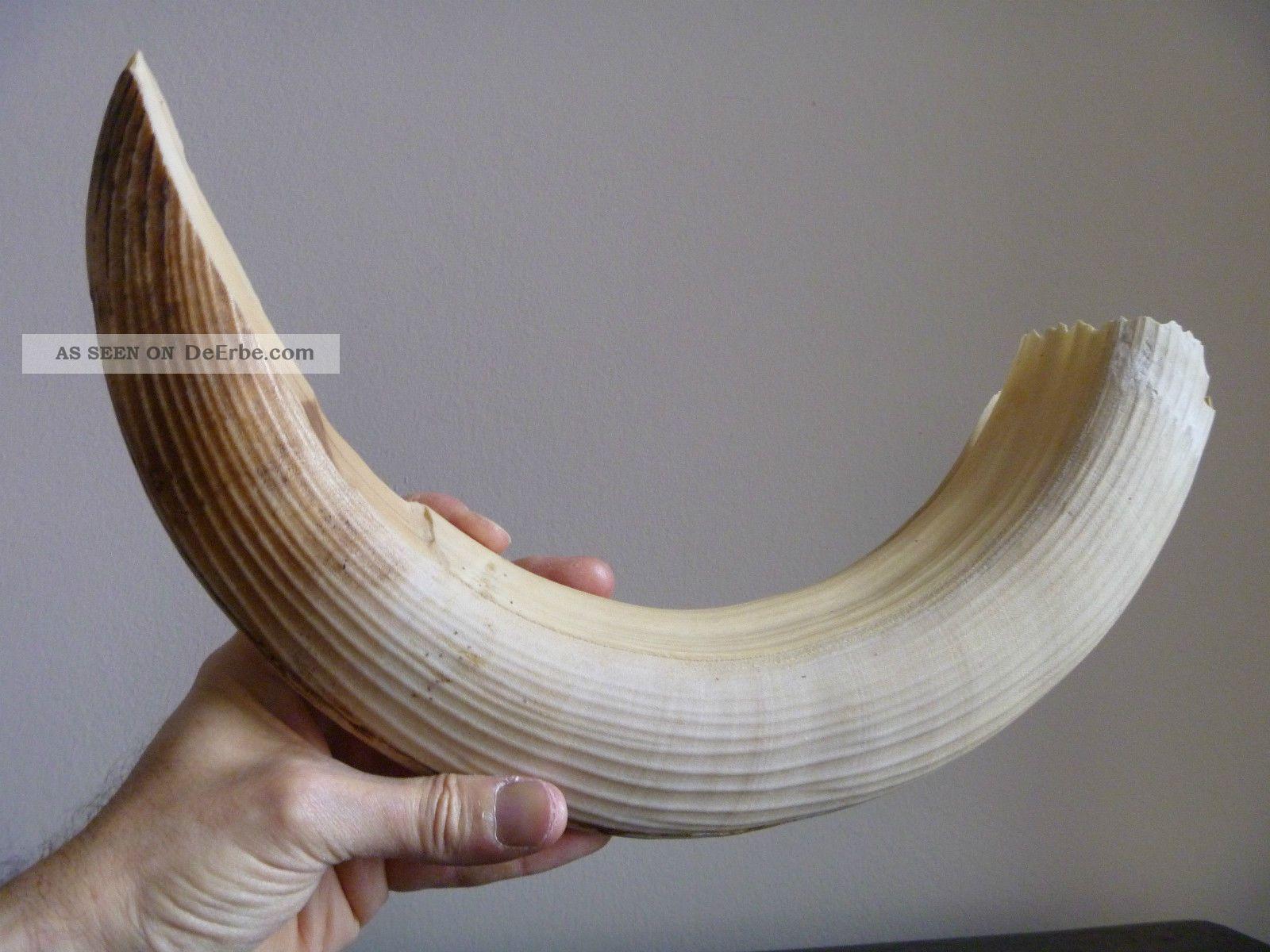 Stück Bein Für Messergriffschalen,  Afrika,  Sehr Alt 1000 Gramm 1kg Kilogramm Beinarbeiten Bild