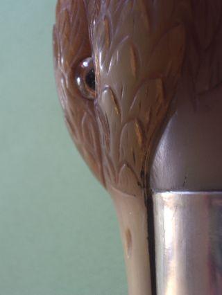 Art Deco Spazierstock Mit Geschnitzter Ente Aus Horn / Glausaugen / 800 Silber Bild