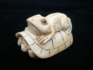 Netsuke Schildkröte / Frosch Turtle / Frog Meiji - Periode Bein Signiert 19jh. Bild