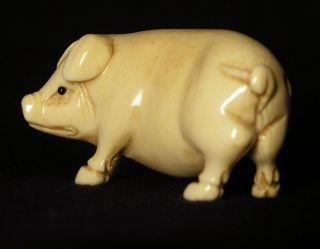 Netsuke,  Schwein,  Japan Um 1900 Meiji - Periode,  Bein Geschnitzt Signiert Bild