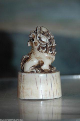 Antike Netsuke Beinschnitzerei Wächterlöwe Bein Schnitzerei 4 Fu - Hund Bild