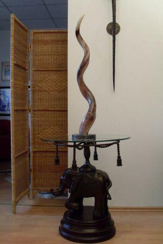 Unikat Kudu Antilope Horn