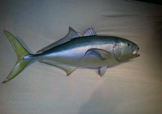 Yello Fin Jack - Fisch Bild